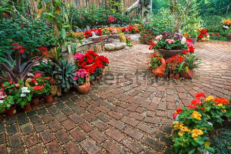 Serra bella fiori fioritura impianti Foto d'archivio © luckyraccoon