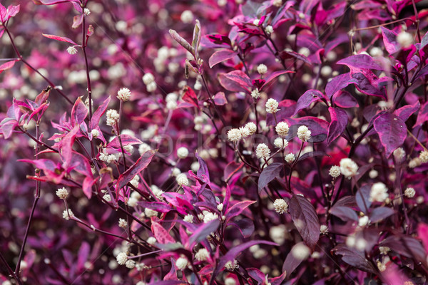 Gyönyörű szokatlan egzotikus növények Thaiföld erdő Stock fotó © luckyraccoon