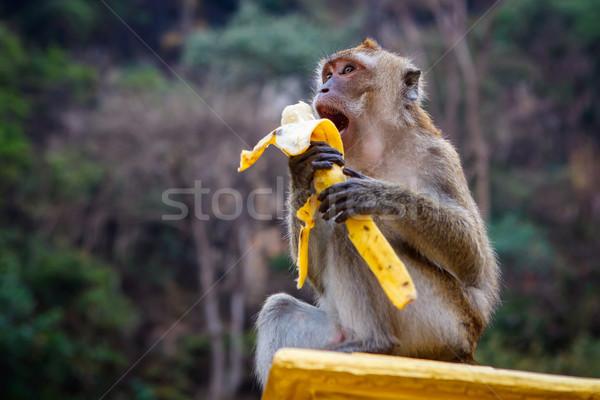 Ein funny Affe Bananen Stein Essen Stock foto © luckyraccoon
