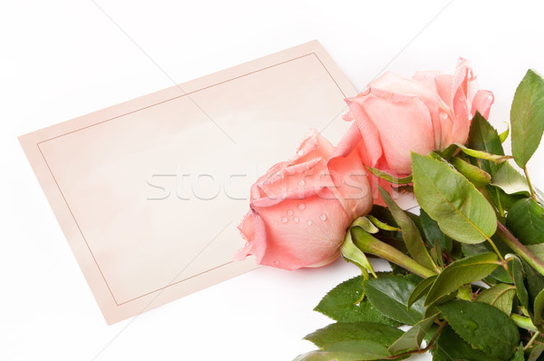 blank card for congratulations with roses Stock photo © luckyraccoon