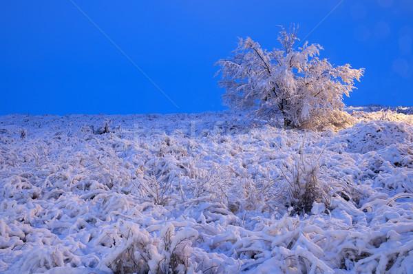 Neve cena noite Foto stock © luiscar