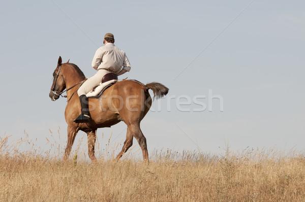 Konia czarny konie biały zwierząt Zdjęcia stock © luiscar