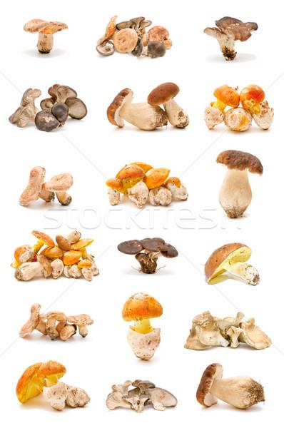 食用 キノコ コレクション 孤立した 白 森林 ストックフォト © luiscar