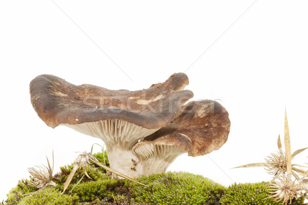 seasonal mushrooms Stock photo © luiscar