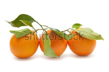 Fresco laranja ecológico branco árvore natureza Foto stock © luiscar
