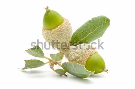 Verde amêndoa folha branco árvore Foto stock © luiscar