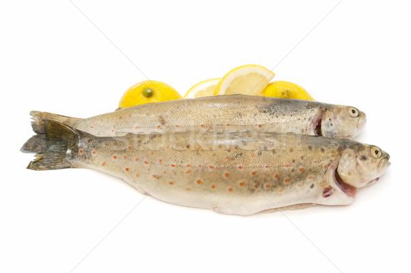 Forellen traditionellen Stil weiß Essen Stock foto © luiscar