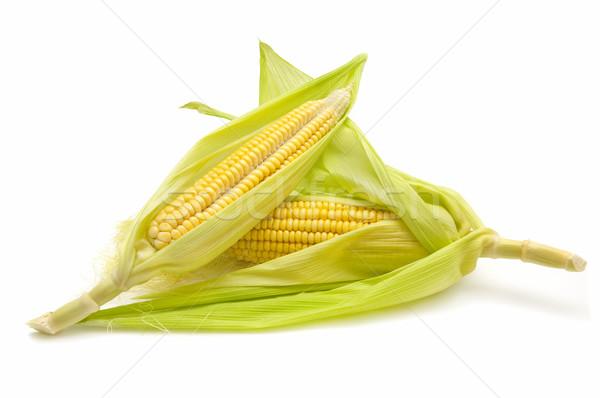 Milho planta branco vegetal grão Foto stock © luiscar