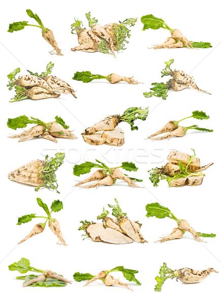 Raio coleção isolado branco fundo planta Foto stock © luiscar