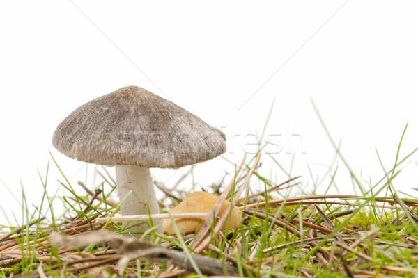 Mevsimlik mantar beyaz orman doğa güzellik Stok fotoğraf © luiscar