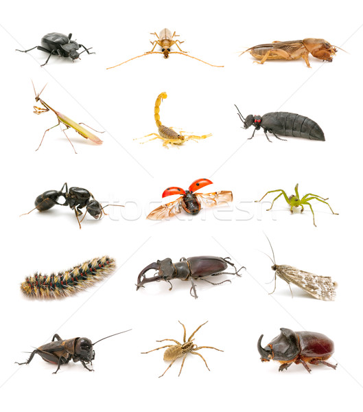 insect collection isolated on white background Stock photo © luiscar