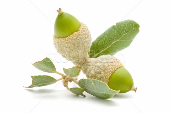 Chêne vert isolé blanche arbre alimentaire Photo stock © luiscar