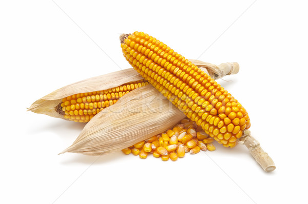 corn cobs and corn kernels
