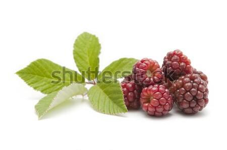 Branco comida folha fruto Foto stock © luiscar