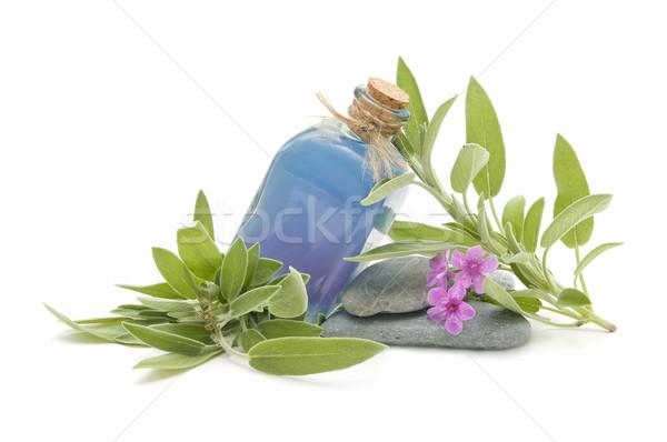 Spa natürmort aromatik otlar çiçek çiçekler Stok fotoğraf © luiscar