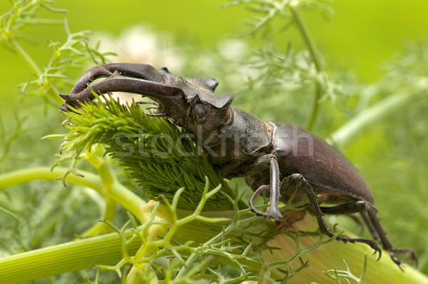 жук природного среда обитания природы макроса Сток-фото © luiscar