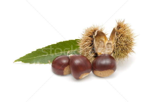 Freshly harvested chestnuts Stock photo © luiscar