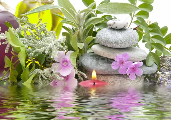 Leczenie uzdrowiskowe naturalnych zioła kwiat zdrowia pozostawia Zdjęcia stock © luiscar