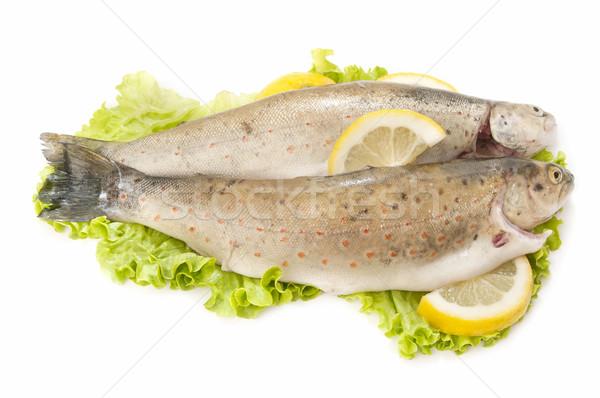Vad pisztráng hagyományos stílus fehér étel Stock fotó © luiscar