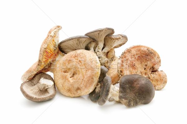 Seizoen- champignons witte bos natuur schoonheid Stockfoto © luiscar