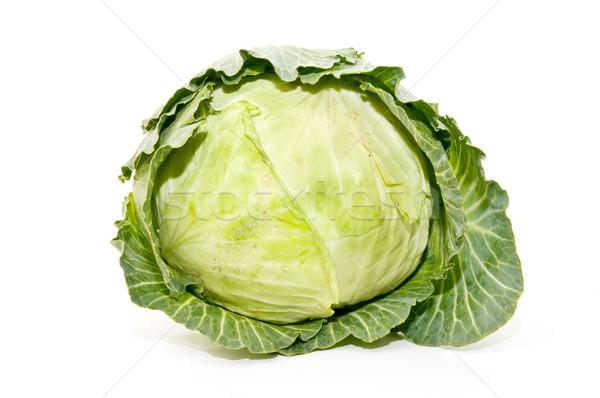 Ecológico repolho branco legumes agricultura Foto stock © luiscar