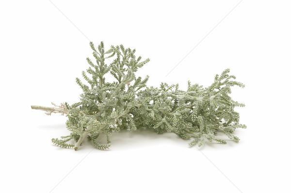 Erva campo verde estância termal temperos ingrediente Foto stock © luiscar