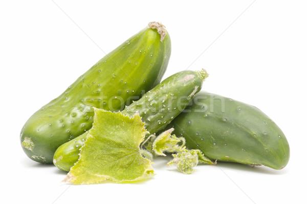 Fresco pepinos branco planta legumes Foto stock © luiscar