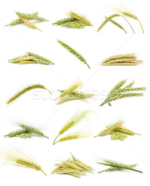 ушки зерна коллекция изолированный белый бизнеса Сток-фото © luiscar