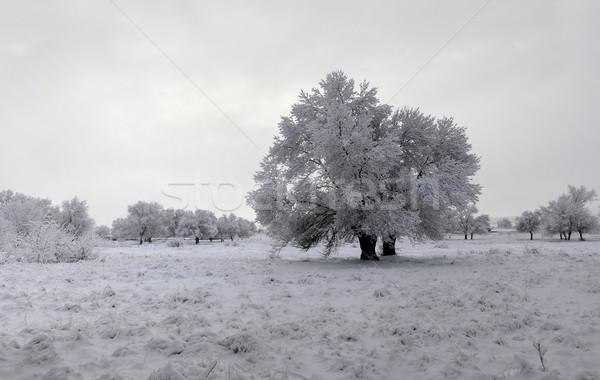 Zimą lesie krajobraz charakter śniegu piękna Zdjęcia stock © luiscar