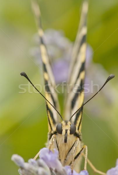 Motyl dziedzinie kwiaty ogród wiosną Zdjęcia stock © luiscar