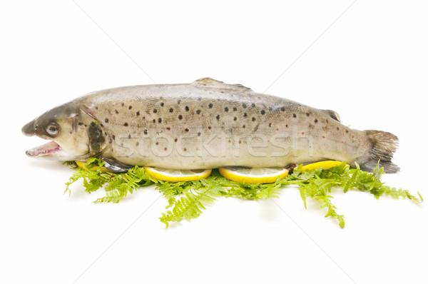 Trucha tradicional estilo blanco alimentos Foto stock © luiscar
