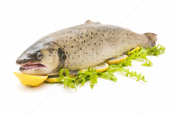 wild trout  Stock photo © luiscar