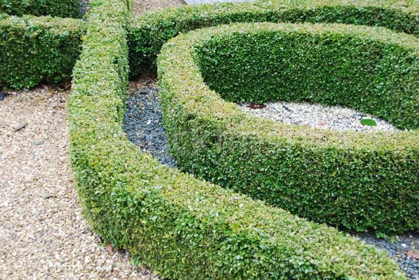 Ornamental garden Stock photo © luissantos84
