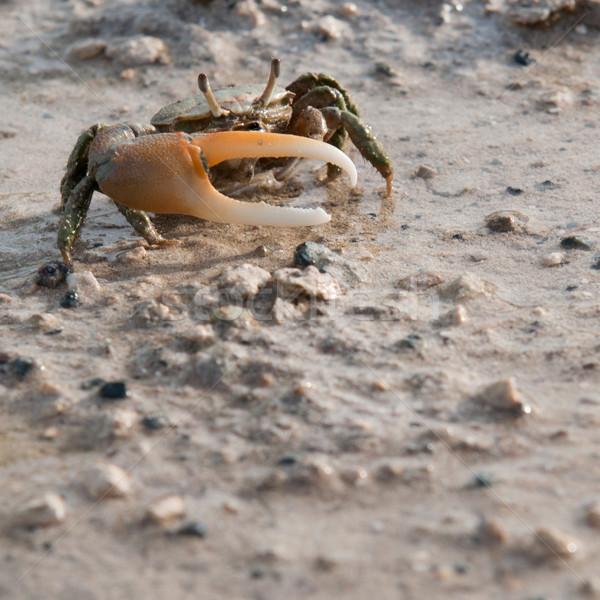 Krab een bewegende vijver zee oceaan Stockfoto © luissantos84