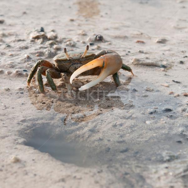 Krab gat een vijver zee oceaan Stockfoto © luissantos84