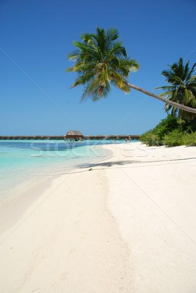 Plaży raj palma wiszący piękna scena Zdjęcia stock © luissantos84