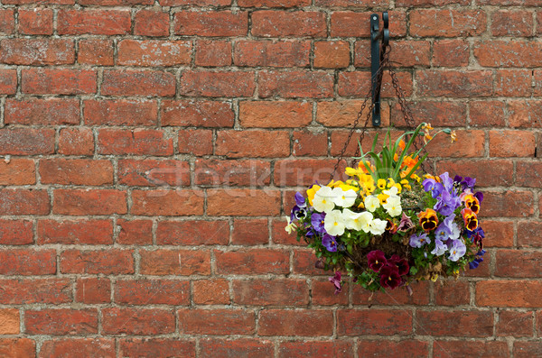 Asılı çiçekler pot tuğla duvar duvar Stok fotoğraf © luissantos84
