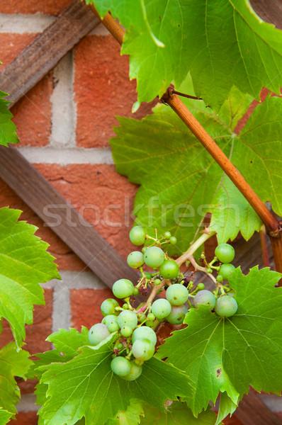 биологический виноград растущий задний двор саду Сток-фото © luissantos84