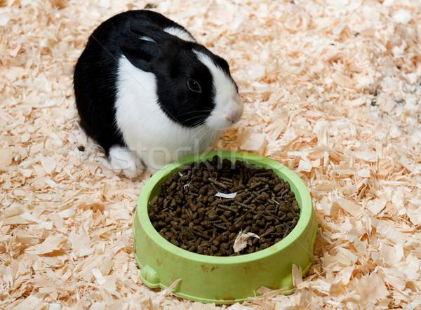 Dutch rabbit Stock photo © luissantos84