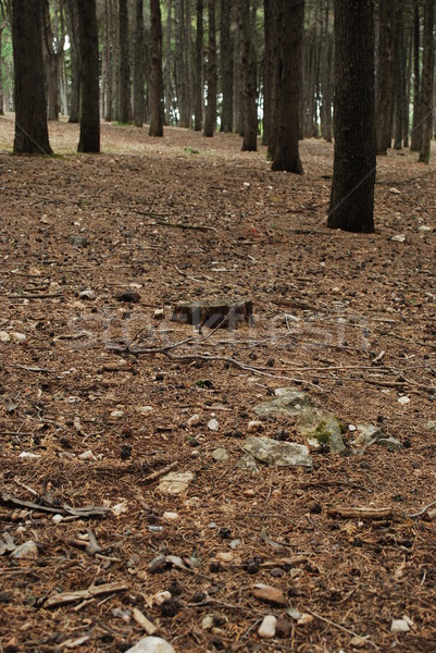 Beautiful landscape on a forrest Stock photo © luissantos84