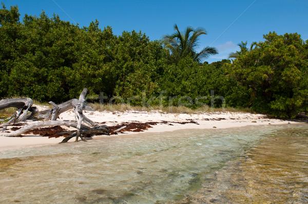Troncos praia água árvore Foto stock © luissantos84