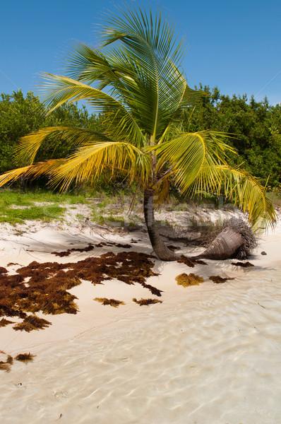 Palma vibrante spiaggia acqua Foto d'archivio © luissantos84