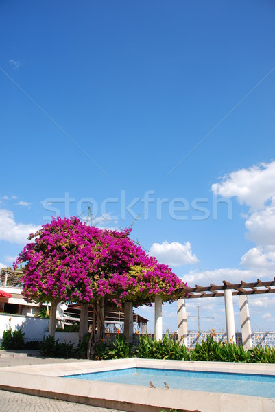 Lila Blumen schönen Ansicht blauer Himmel Himmel Stock foto © luissantos84