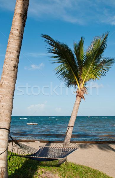 Stock fotó: Függőágy · pálmafák · trópusi · üres · kettő · tengerpart
