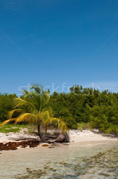 Deserted beach Stock photo © luissantos84