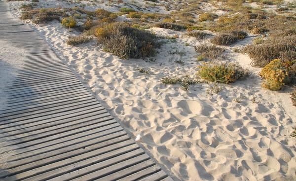 Legno spiaggia foto erba duna panorama Foto d'archivio © luissantos84