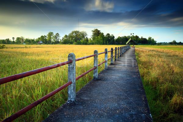 トウモロコシ畑 日没 タイ 橋 太陽 美 ストックフォト © lukchai