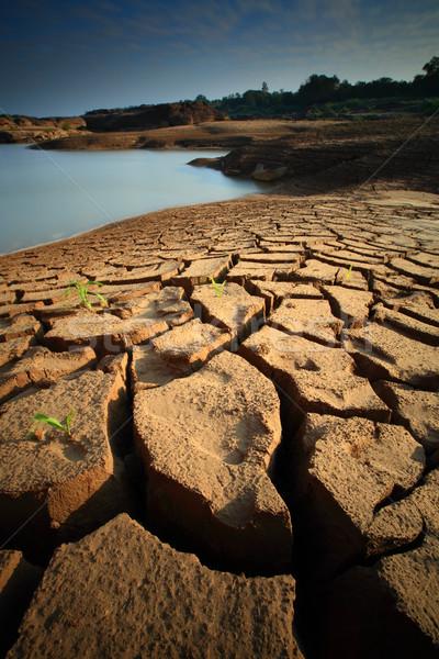 Secar solo textura terreno fundo terra Foto stock © lukchai