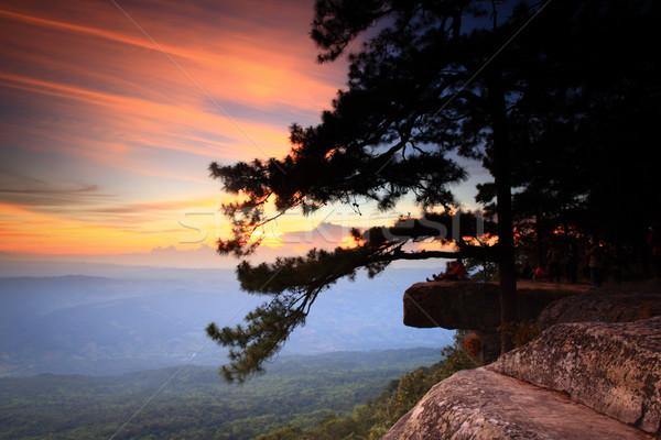 Pôr do sol parque Tailândia árvore madeira sol Foto stock © lukchai