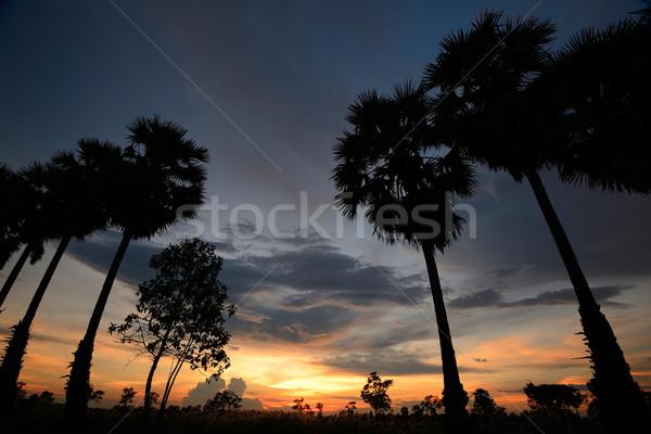 Silhueta pôr do sol raio palmeira paisagem verão Foto stock © lukchai